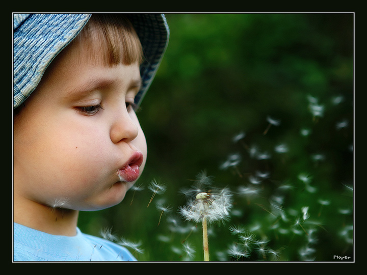 Dandelion | emotion, nature, child, flower