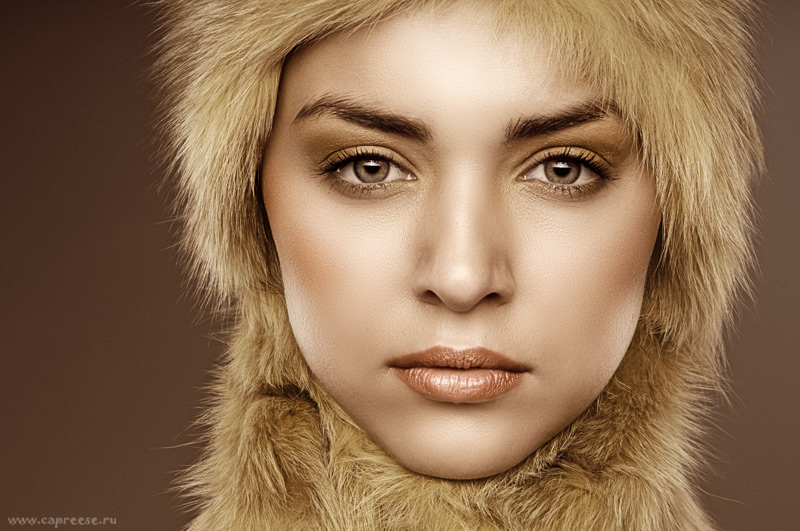 Gold | close-up, fur