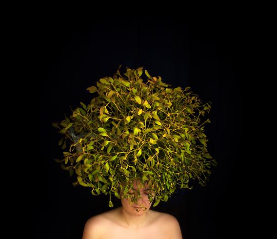 Girl with the bush instead of hair | bush, hair, girl, black background